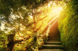 Siga sua energia e seu caminho de luz